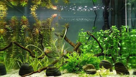 Обустройство аквариума: выбор подходящего резервуара