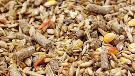 Основные преимущества комбикорма для птицы