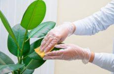Рекомендации по уходу за растениями